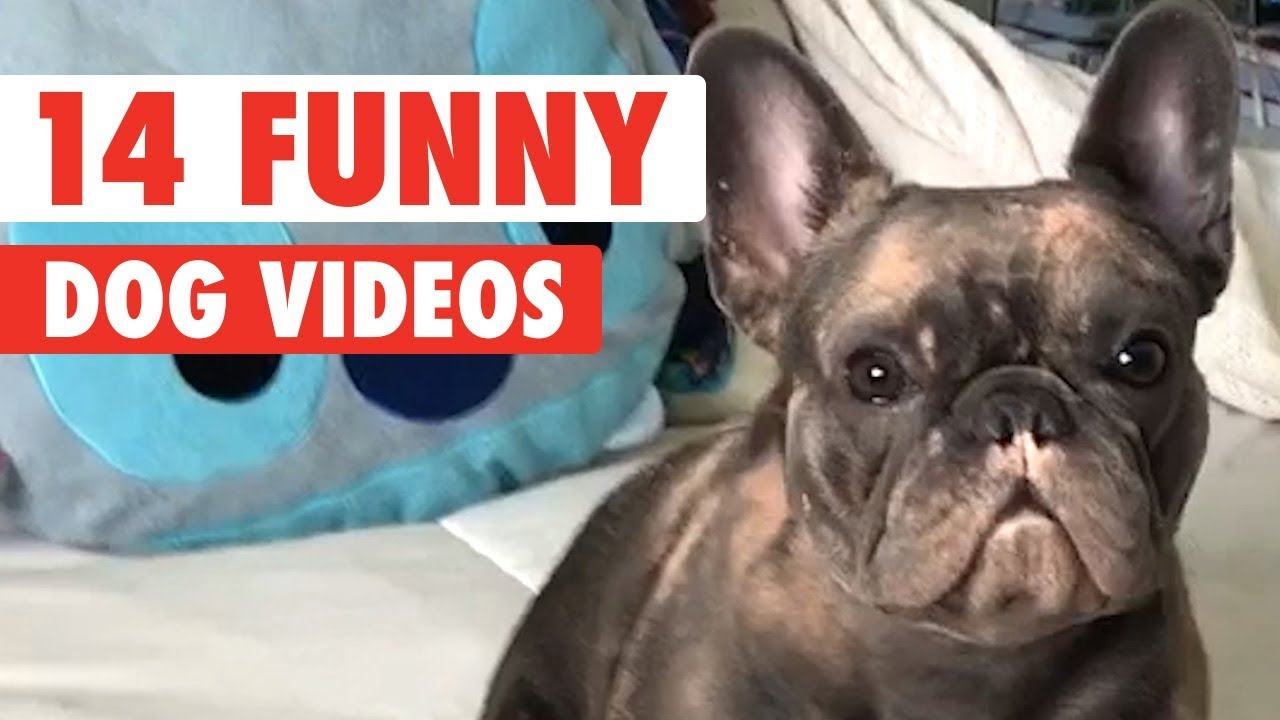 Guilty 14 Funny Dogs Video Compilation 2017 Youtube 14 Funny Dogs Video Compilation 2017 Youtube