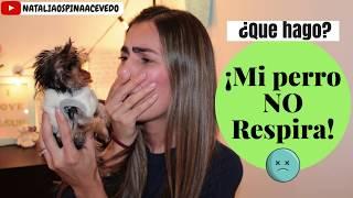 ¿Que hago? Mi perro no respira!! - Tips by Natalia Ospina