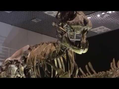 タルボサウルス  Tarbosaurus  ①:「大恐竜展」ゴビ砂漠の驚異