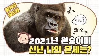 """2021년 """"원숭이띠신년운세""""재물운 초대박인 잔나비띠는 몇년생?/ 토정비결 신년운세/의정부…"""