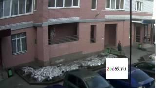 видео Кошка упала с балкона или окна, первая помощь