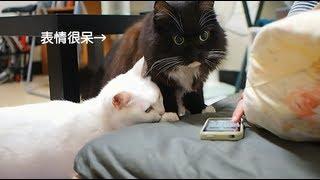 聽到陌生貓叫聲的反應 thumbnail