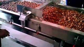 Date Processing Line