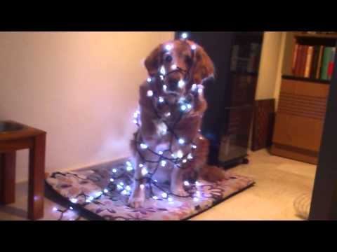 Dog Christmas tree ...