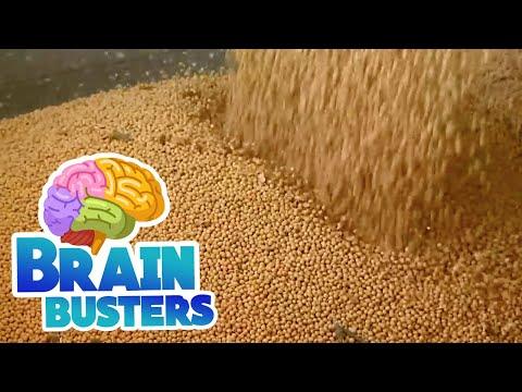 Serious Science: Soybean Farming