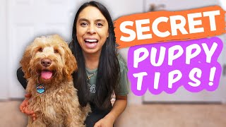 EASIEST WAY TO TRAIN PUPPY  Stop making it harder on yourself and try this!
