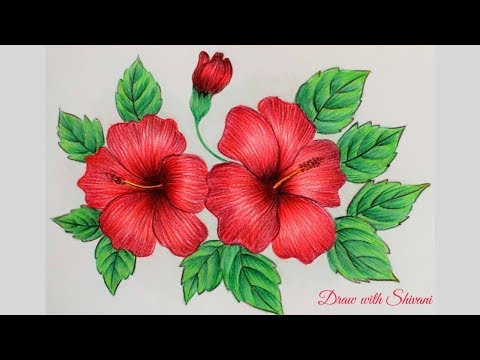 Hibiscus Sketching using Pencil Colors/ How to draw Hibiscus