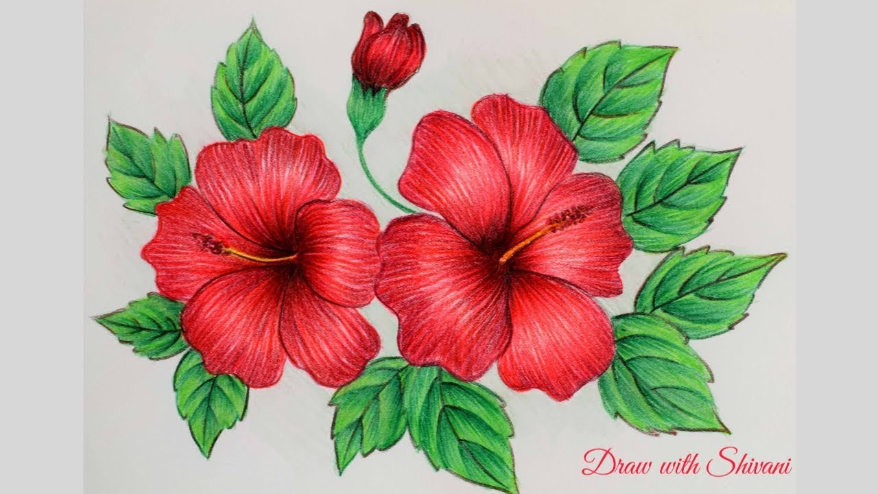 Hibiscus Sketching using Pencil Colors/ How to draw Hibiscus Flower