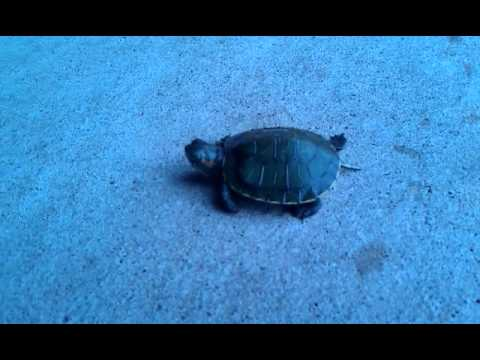 Am I turtley enough for the turtle club?