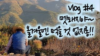 일상 Vlog #4   은퇴 후, 소소한 시골일상👨🌾 (고구마 캐기)