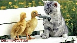 VERY FUNNY ANIMAL VIDEOS – FUNNIEST ANIMALS FAILS COMPILATION – ...