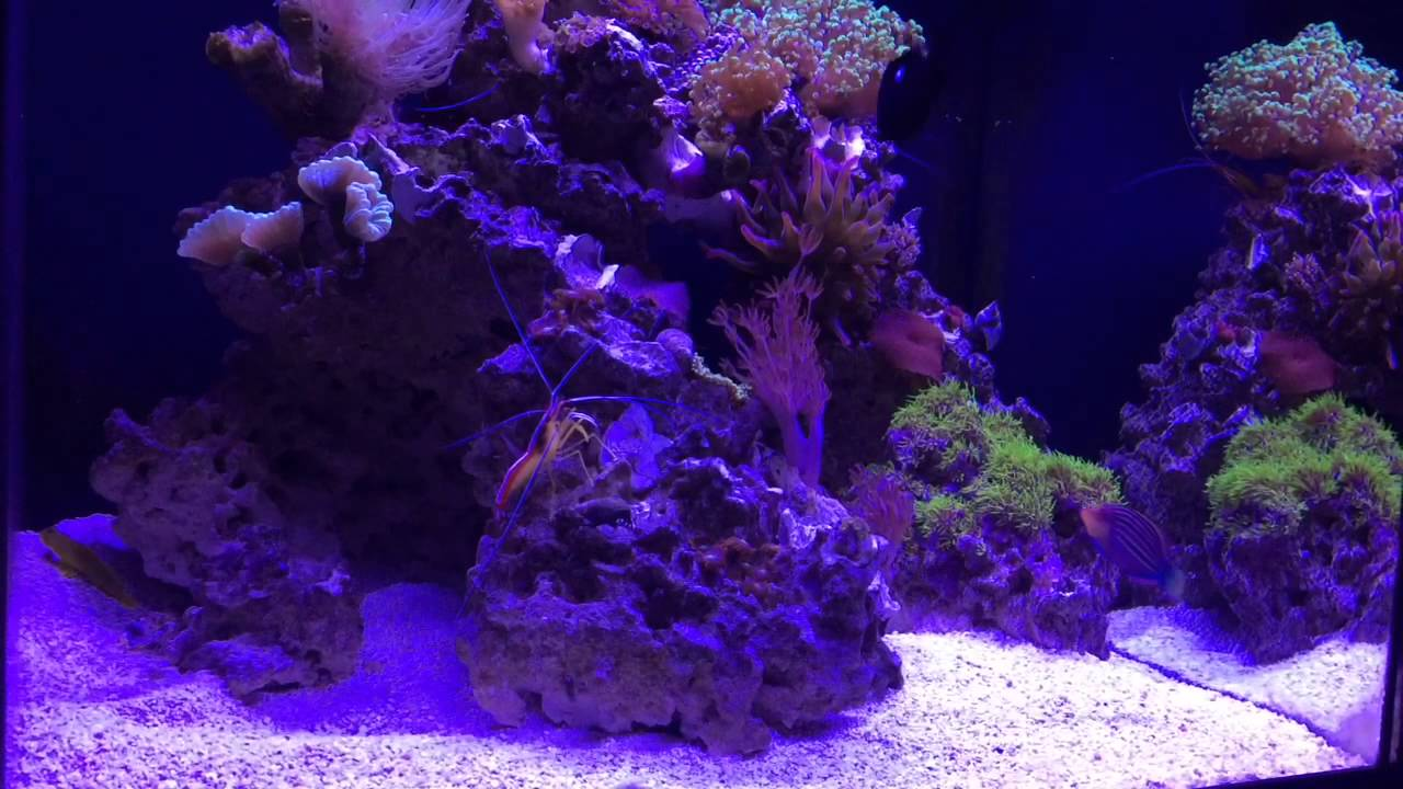 Marineland 37 gallon cube reef tank raised clown fish for Cube saltwater fish tank