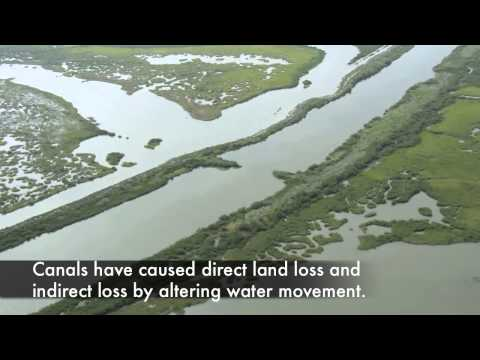 Sea-Level Rise, Subsidence, and Wetland Loss