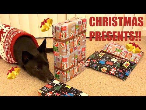 shiba-dog-opens-his-christmas-presents!!