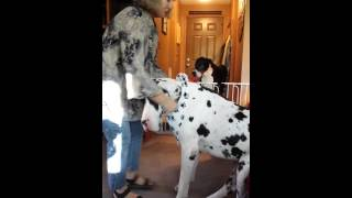 Dog Scarf Drool Dabbers