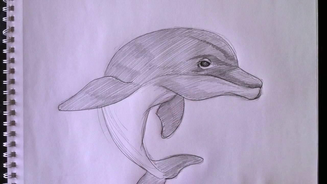 comment dessiner un dauphin - YouTube