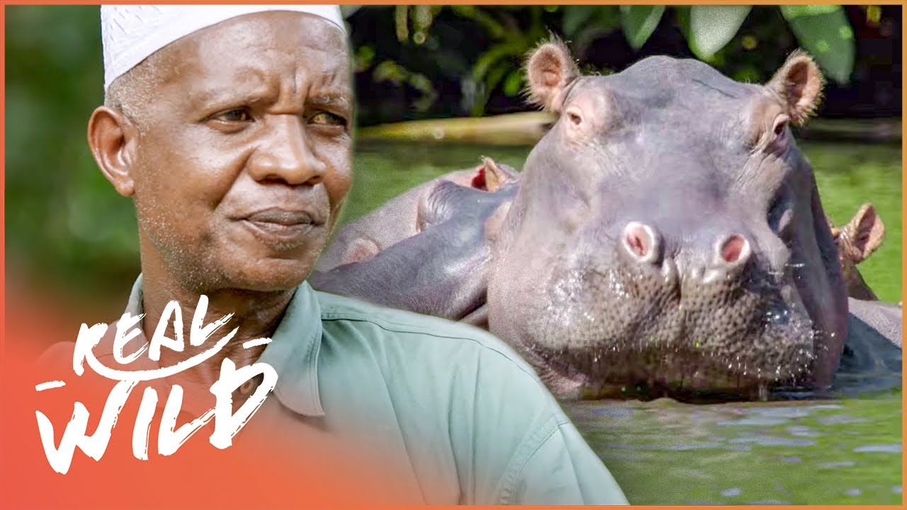 The Incredible Hippo Whisperer Of Tanzania (Full Documentary HD) | Going Wild | Real Wild