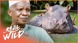 The Incredible Hippo Whisperer Of Tanzania (Nature Documentary) | Going Wild | Real Wild