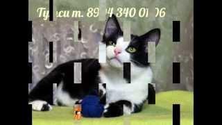Мы хотим домой!..Кошки и коты ищут дом.