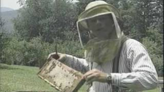 Honey Bees and Beekeeping 6.1: Its Harvest Time