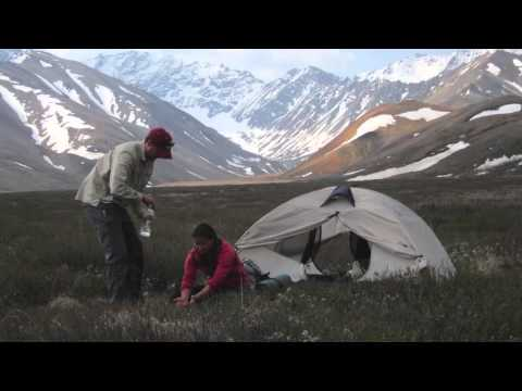 Denali National Park - The Ultimate Guide to the Mountain, Wildlife, and Year-Round Activities