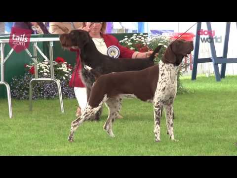 Windsor Dog Show 2016 - Gundog group