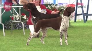 Windsor Dog Show 2016  Gundog group