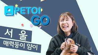 [PETOI] 페토이 GO 얌이네 편