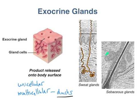 glandular epithelial tissue Epithelial tissues consists of sheets of conjoined cells that (1) line surfaces and (2) form glands as such, epithelial tissue covers the body.