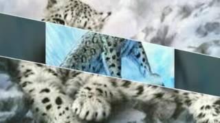 Песня с картинками ирбисов