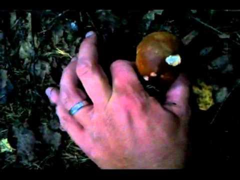 funghi-porcini-a-go-go!-spettacolo-in-alto-adige-1°-parte
