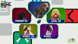 Puppy Bowl: Around the Bowl