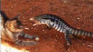 Кот и ящерица. Приколы с котами. Подборка. Смешные коты, кошки, котята. Cat and lizard.