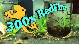 300 Redfire 400l Aquarium