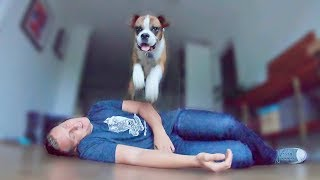 Pretending To Faint In Front Of My Dog. Amazing Reaction by Flip 