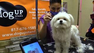 Maltese Hair Cut New Client