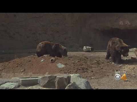 BEARDO - Harmony Hill Opens At The Denver Zoo