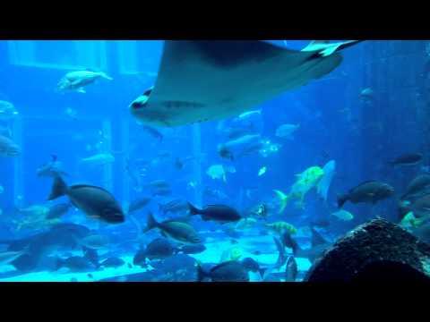 Lost Chamber Aquarium | Dubai Aquarium | Atlantis, Palm Island Dubai