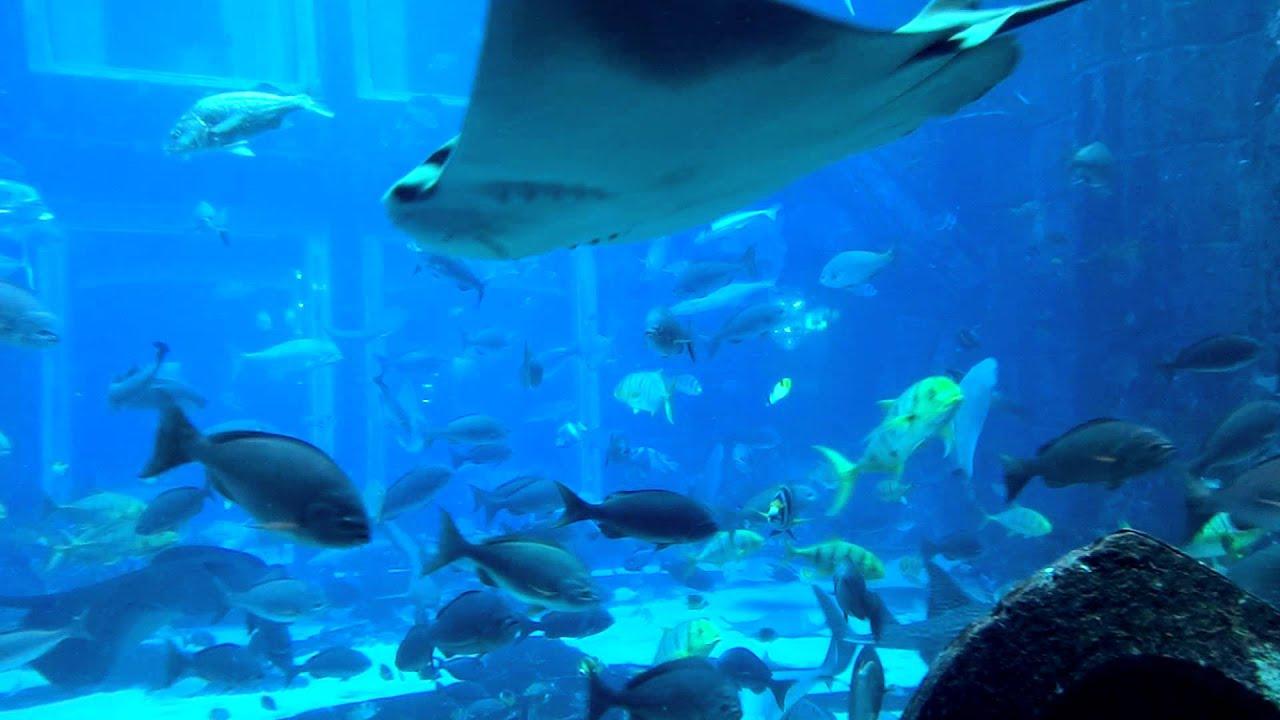 Lost Chamber Aquarium Dubai Aquarium Atlantis Palm