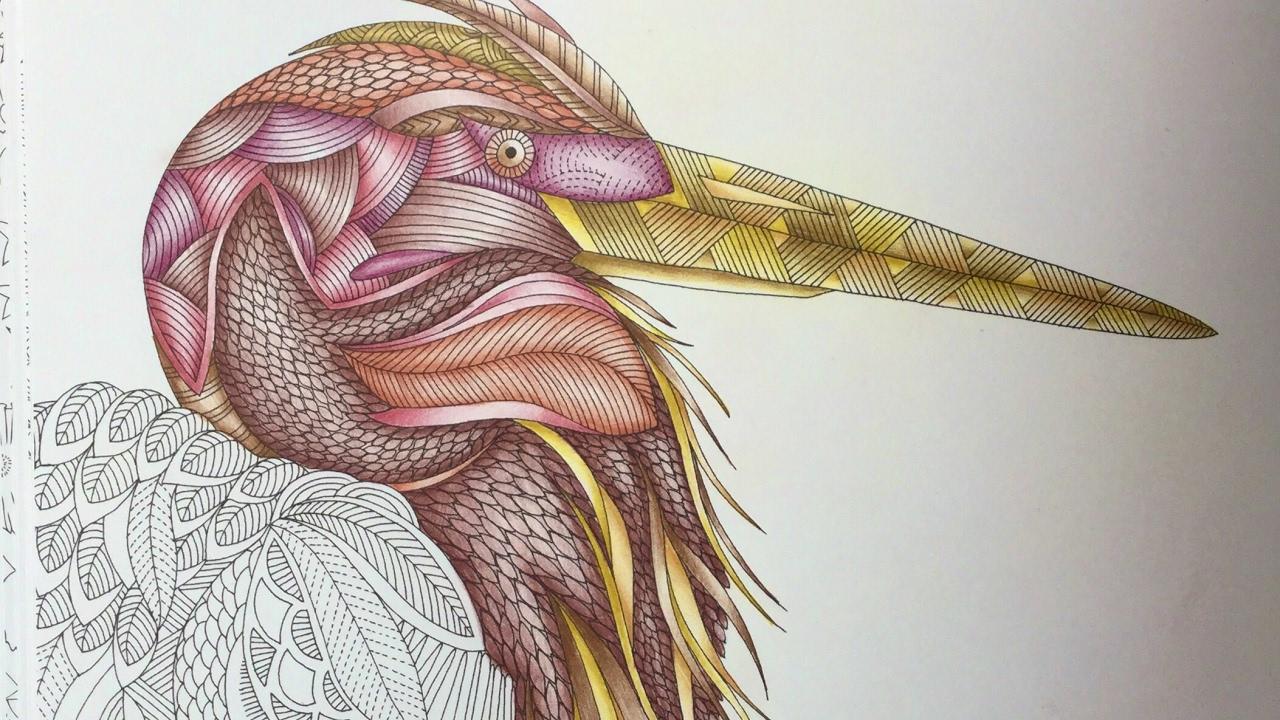Animal Kingdom By Millie Marotta Polychromos Part 1