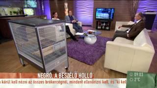 Negró, a beszélő holló - 2015.03.06. - tv2.hu/mokka