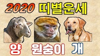 [신년운세] 2020 경자년 양띠? 원숭이띠(잔나비띠)? 개띠? 운세는? / 연령별 띠 운세