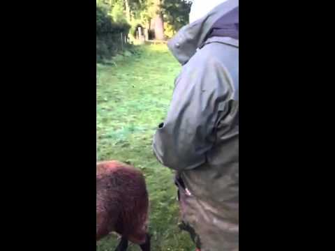 Ewan cuddling Barbie the sheep. Lanark - 10/15