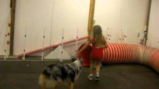 Goofy Dog Practicing Agility Course With Cute Kid.mp4
