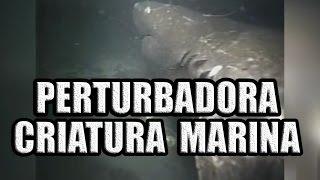 """Perturbador Ser Marino Desconocido Captado en Video en """"Las Marianas"""" (GRABACION ORIGINAL)"""