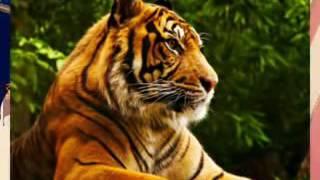 New Rajasthani Modi Song 2016 2017 Rajasthani Dj Song Of 500   1000 Bannedraj R