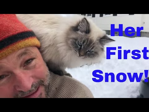 "First Snow for Siberian Forest Cat. Achy Dad's Cat ""Onions"" experiences her first ever snow."