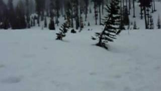 Avalanche Dog Training 050109