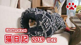 猫部屋ライブ映像   Cats & Kittens room 【Miaou みゃう】