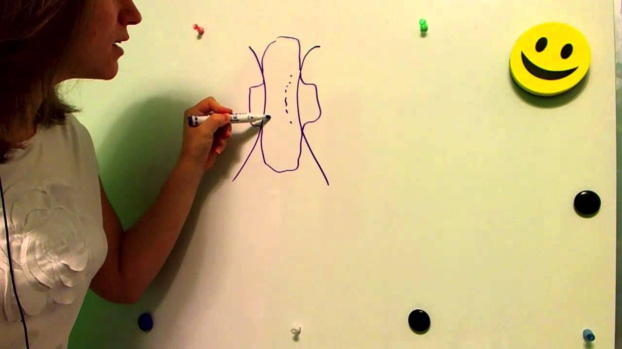 видео как женьщины меняют прокладки
